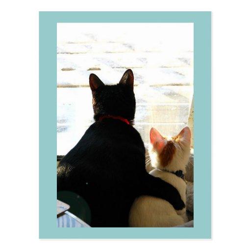 Te amo gatos postal