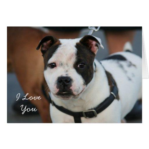 Te amo tarjeta de Staffordshire bull terrier