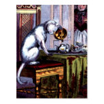 Té de colada del gato tarjetas postales