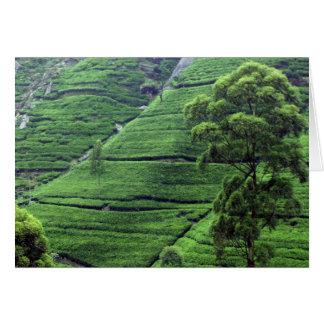 Tea Estate, Kandy District, Sri Lanka Greeting Card