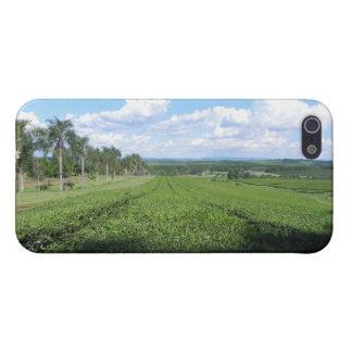 Tea Farm Cover For iPhone SE/5/5s