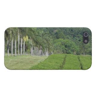 Tea Farm near Jungle iPhone SE/5/5s Case