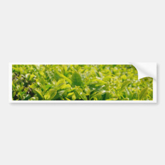 Tea gardens bumper sticker