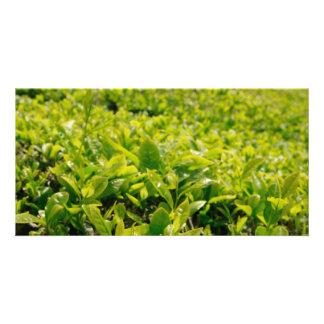 Tea gardens card
