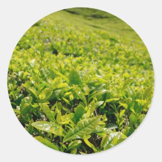 Tea gardens classic round sticker