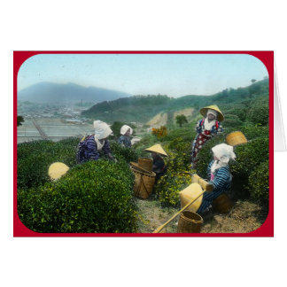 Tea Harvesters at Rest (circa 1902) Card