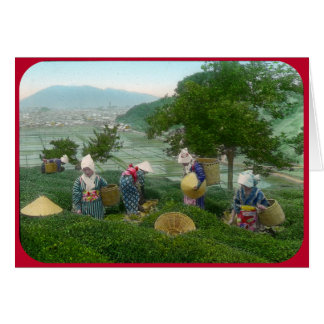 """Tea Harvesters at the """"Table"""" (circa 1902) Card"""