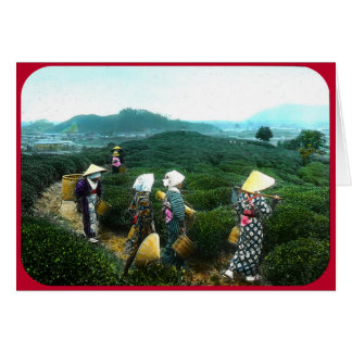 Tea Harvesters at Weary Day's End (circa 1902) Card