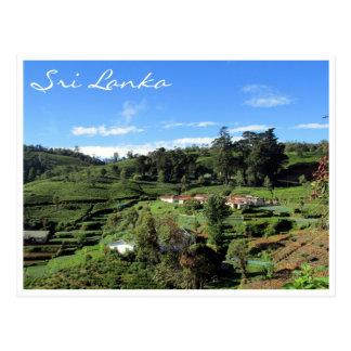 tea hills postcard