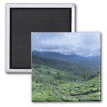 Tea plantation 2 Kerala state India 2 Inch Square Magnet