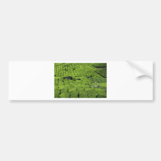 Tea plantation harvest of lush green plants bumper sticker