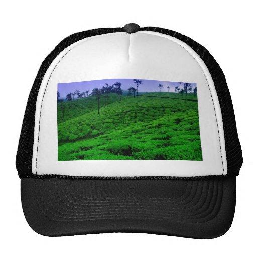 Tea plantation hat