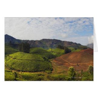 Tea Plantation Kerala state India Card
