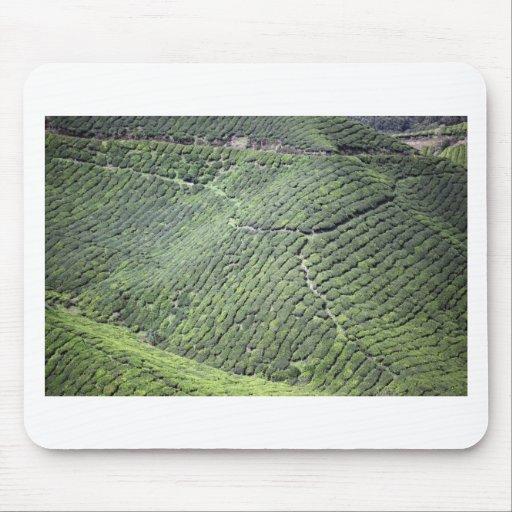 Tea plantation Malaysia Mouse Pads