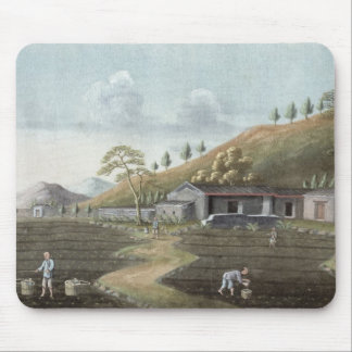 Tea planting (w/c on paper) mouse pad