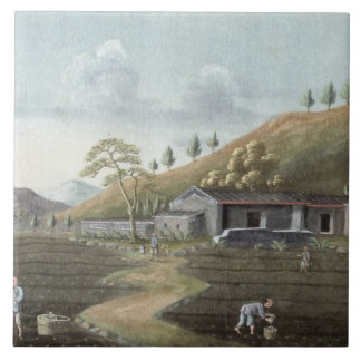 Tea planting (w/c on paper) tile