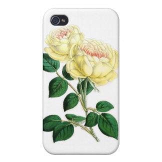 Tea Rose, Madame Margottin iPhone 4/4S Case