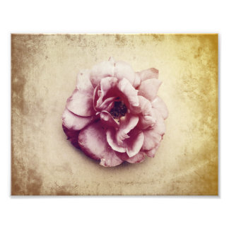 Tea Rose Vintage Art Print Photograph