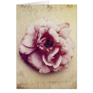 Tea Rose Vintage Card and Postcard