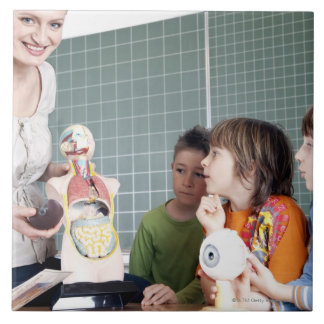 teacher demonstrating model of human body to tiles