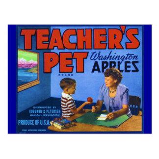 Teacher's Pet Postcard