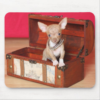 Teacup chihuahua in box mouse pad