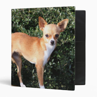 Teacup Chihuahua Puppy Binder