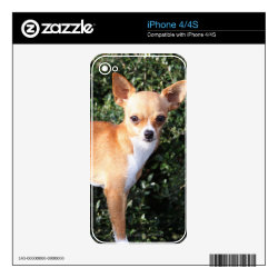 iPhone 4/4S Skin with Chihuahua Phone Cases design