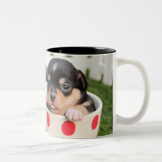 Teacup Chihuahua Puppy Two-Tone Coffee Mug