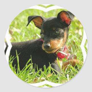 Teacup Chihuahua Stickers