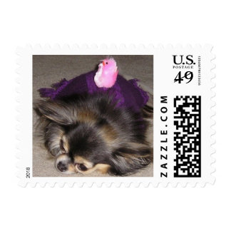 Teacup Long Haired Chihuahua Stamps