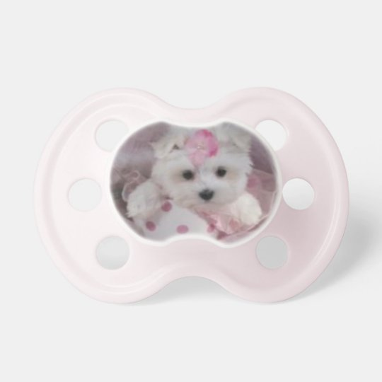 teacup maltese puppy baby girl pacifier zazzlecom