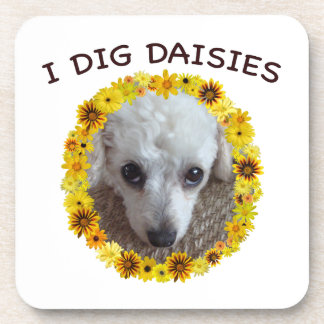 Teacup Poodle Dog Digs Daisies Drink Coaster
