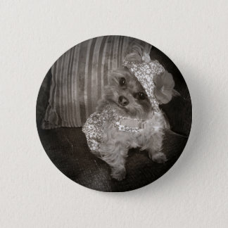 Teacup Yorkie Old Photo Pinback Button