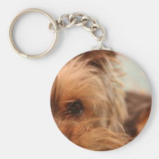 teacup yorkie puppy keychain