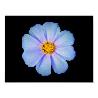 Teal Blue and Purple Daisy on Black Template Poster