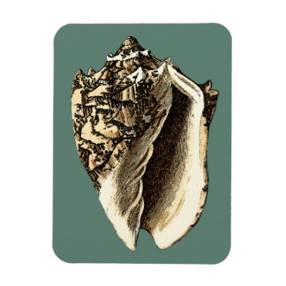 Teal Conch Shell Magnet
