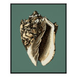 Teal Conch Shell Poster