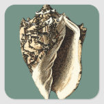 Teal Conch Shell Square Sticker