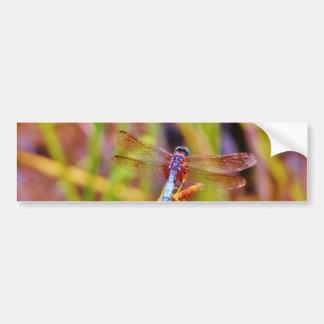Teal Dragonfly on sedge Bumper Sticker