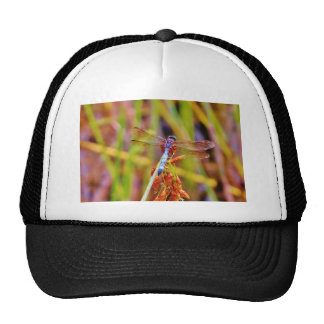 Teal Dragonfly on sedge Trucker Hats