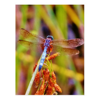 Teal Dragonfly on sedge Postcard