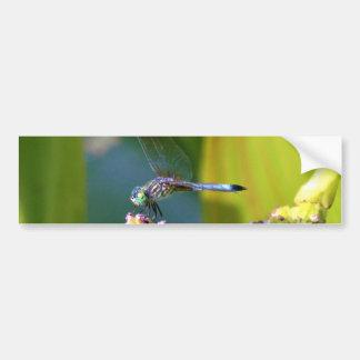 Teal eyed Dragonfly Bumper Sticker