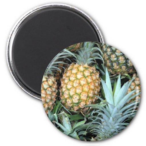 Teal, Green and Golden Hawaiian Pineapples Fridge Magnets