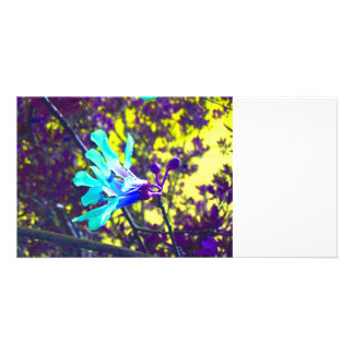 teal orchid purple yellow sky cool flower custom photo card
