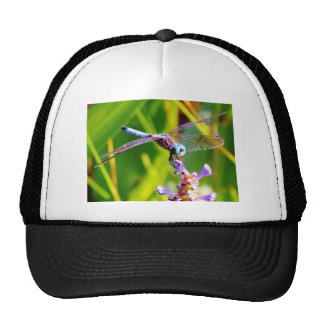 Teal purple Dragonfly Mesh Hats