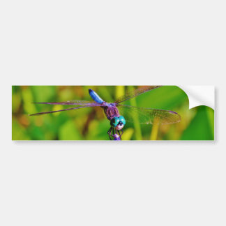 Teal Rainbow Dragonfly Bumper Stickers