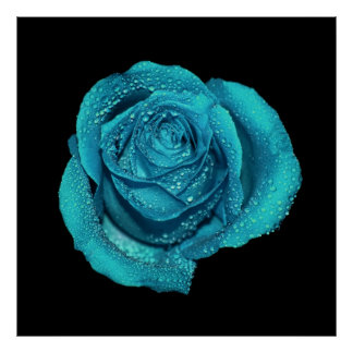Teal Rose Flower Photo Poster