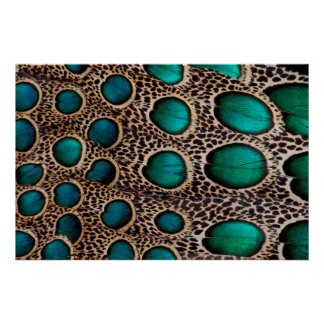 Teal Spotted pheasant feather Poster