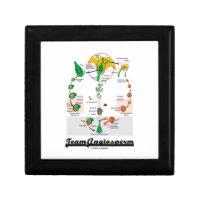 Team Angiosperm Alternation Of Generations Flower Keepsake Box